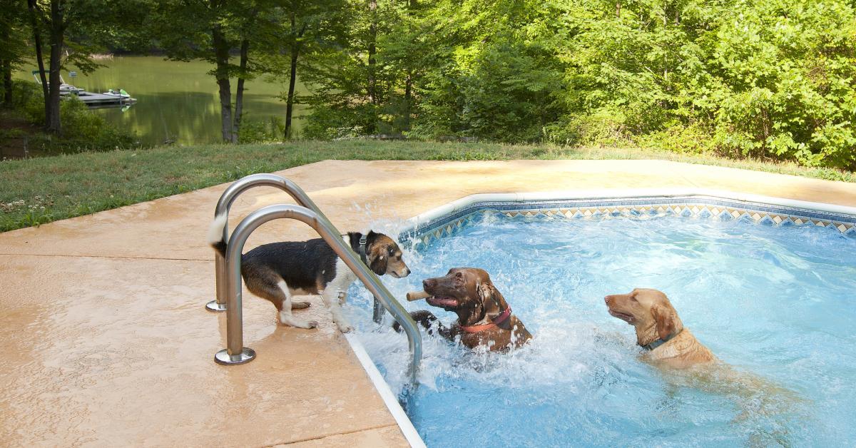 Hundefreundliches Ferienhaus Mit Pool Top Reiseziele Hometogo