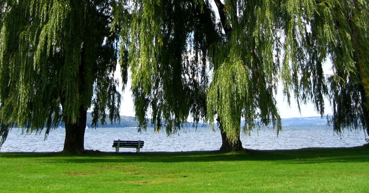 Cayuga Lake Vacation Rentals From 316 Hometogo