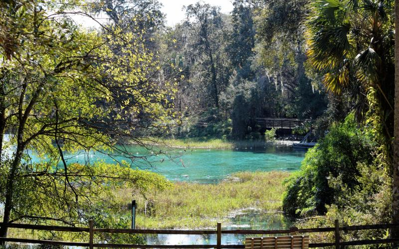 View of a blue spring surrounded by greenery in Florida