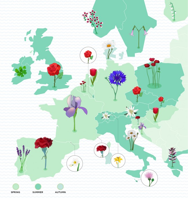 _Flower-infographic-Blog-EN
