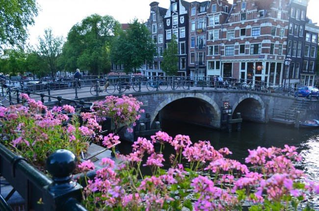 Pink flowers next to a canal in Amsterdam with view of gabled houses
