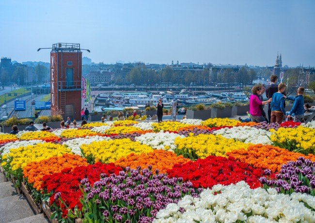 Colourful tulips at the Tulp Festival, Amsterdam